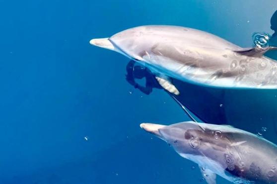 Activities in Marbella dolphins