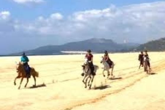 Activities in Marbella horse riding 1
